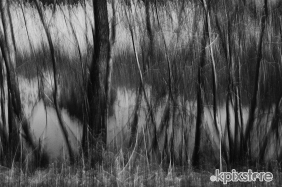 Stampe famose Andrea Marcovicchio REFLECTIONS OF TREES