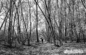 Stampe famose Bobby Photography BOSCO D'AUTUNNO